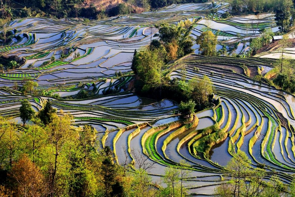 مصاطب الأرز المنحوتة باليد على المنحدرات. ISuSFFCfsRKbj6R8PfRk