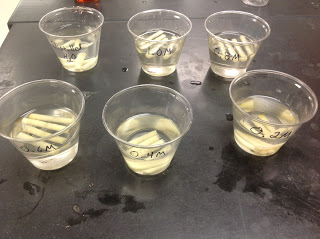 osmosis potato lab
