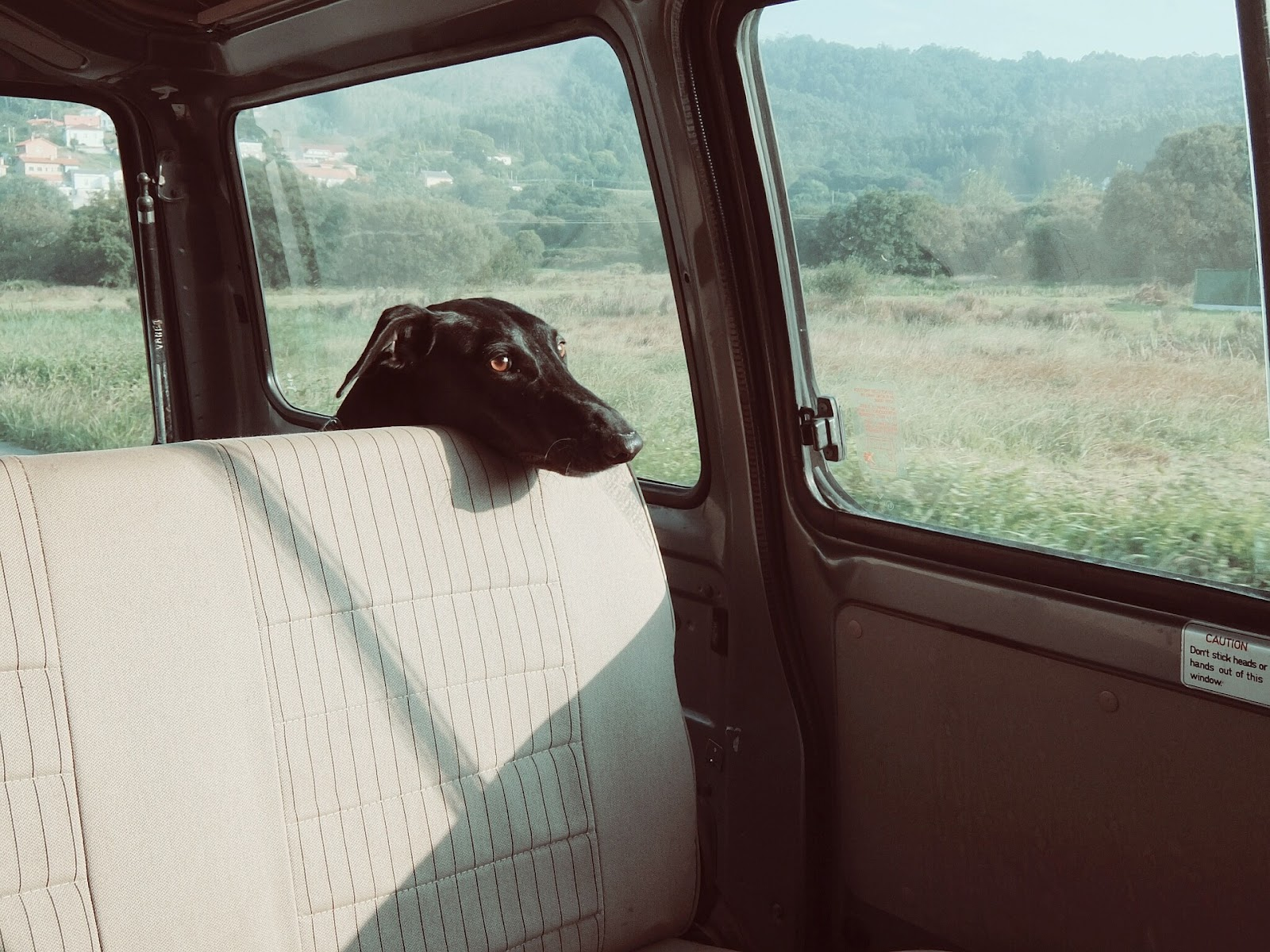 dog riding in back of car