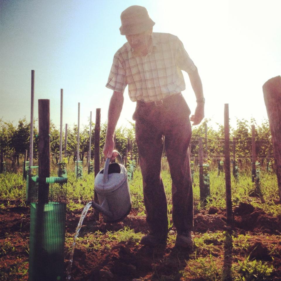 Un vigneron ayant décidé d'arroser ses plants.