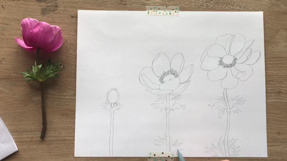 flower drawing prompts
