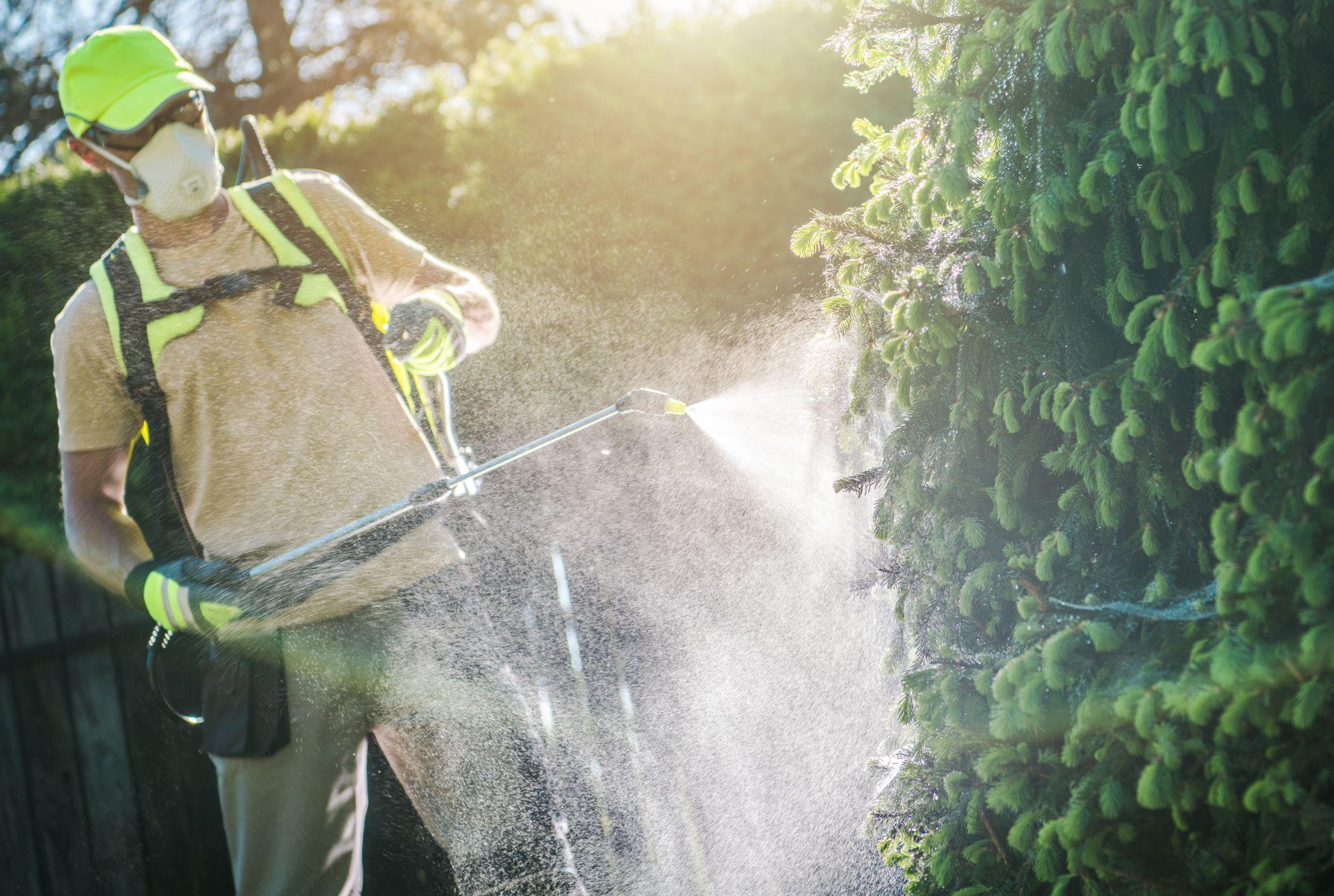 A landscape contractor applying pesticide to a garden bush