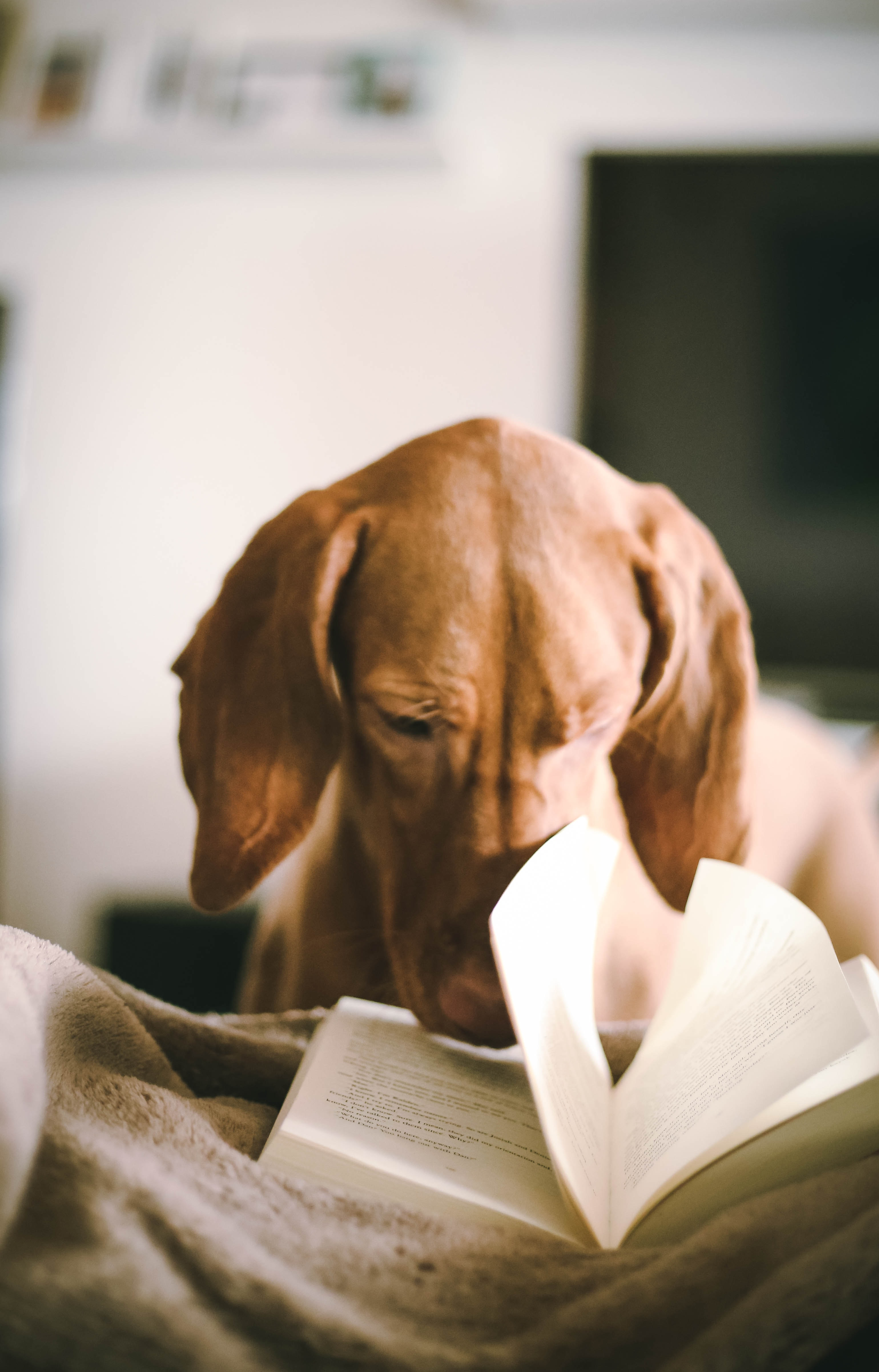 Dog flipping through pages of a novel.