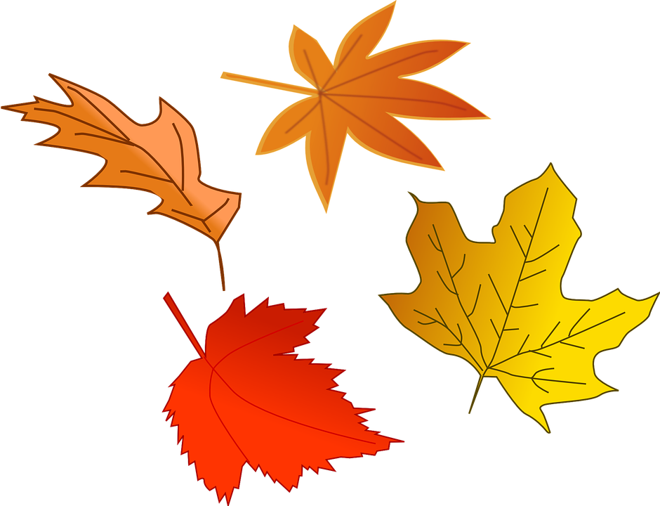Free vector graphic: Foliage, Autumn, Fall, Leaf, Tree - Free ...