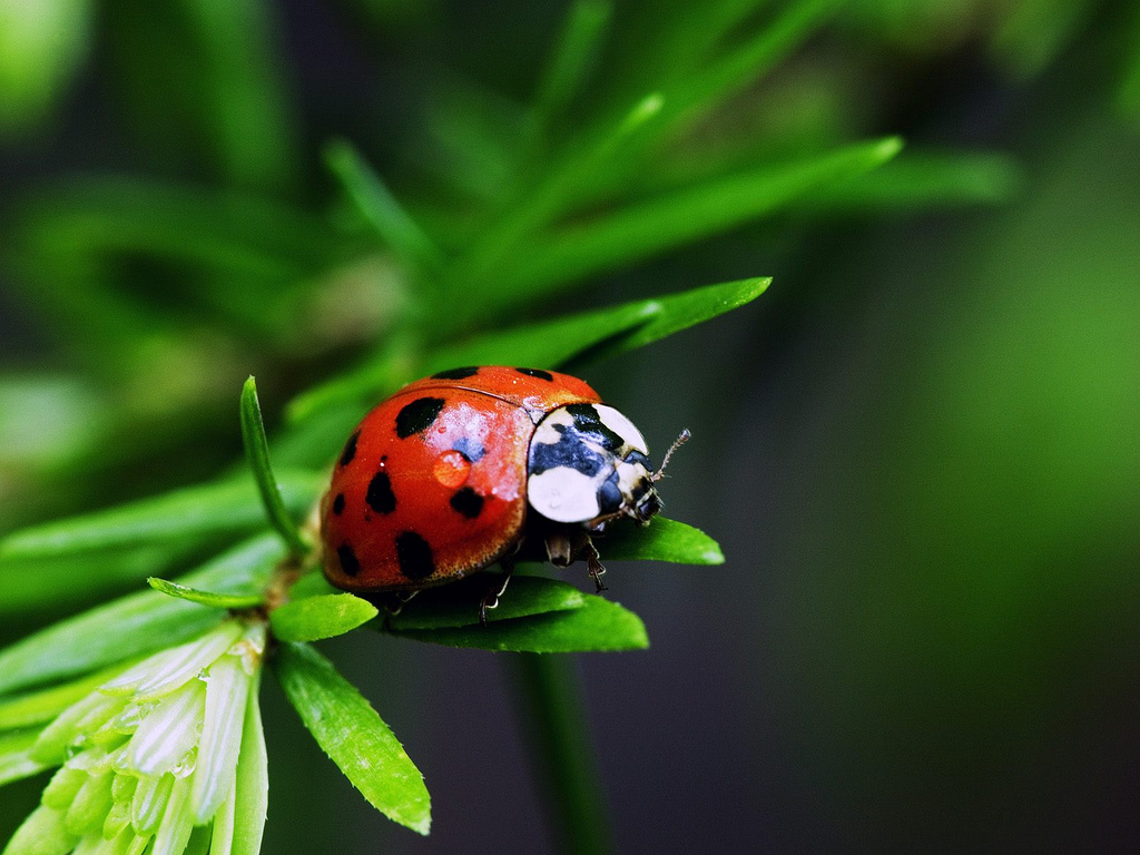 ... ladybug on the leaf | by ...