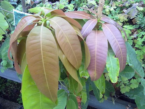 Các loại lá cây chữa bệnh tiểu đường hiệu quả  - Ảnh 1