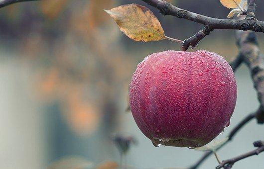 Apple, Fall, Juicy, Food, Autumn, Fruit