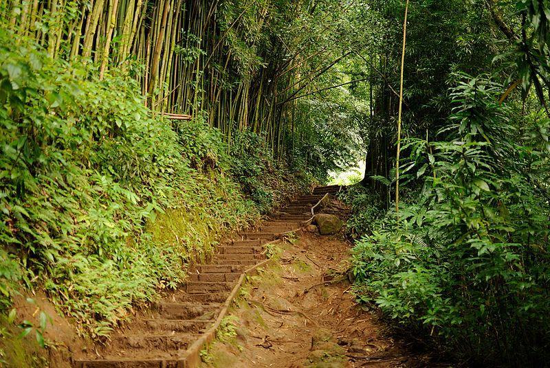 File:Manoa Falls Trail (8331389248).jpg