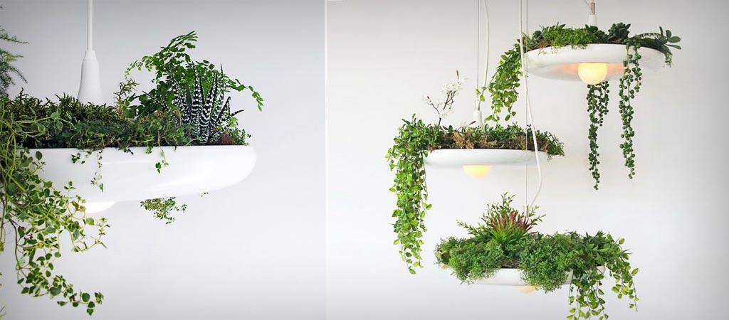 plants in lights