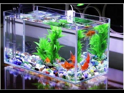 màu sắc của cá có liên quan đến Ngũ hành