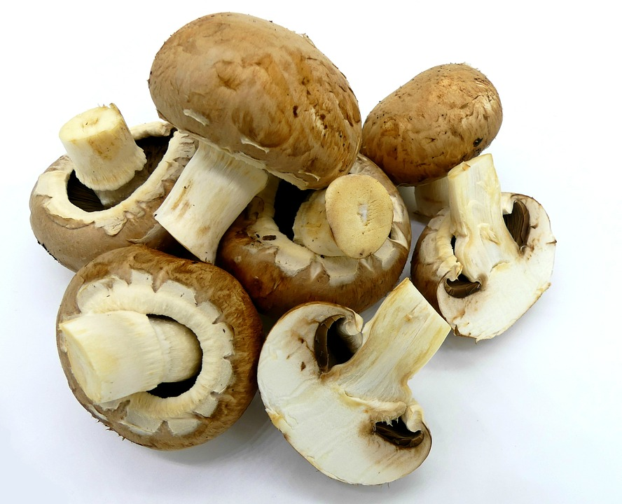 mushrooms-2097619_960_720.jpg