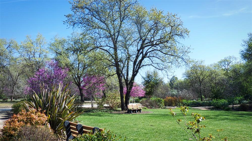 Arboretum View 10.jpg