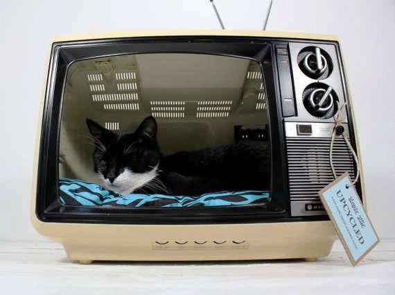 casa para gato en monitor de pc 01.jpeg