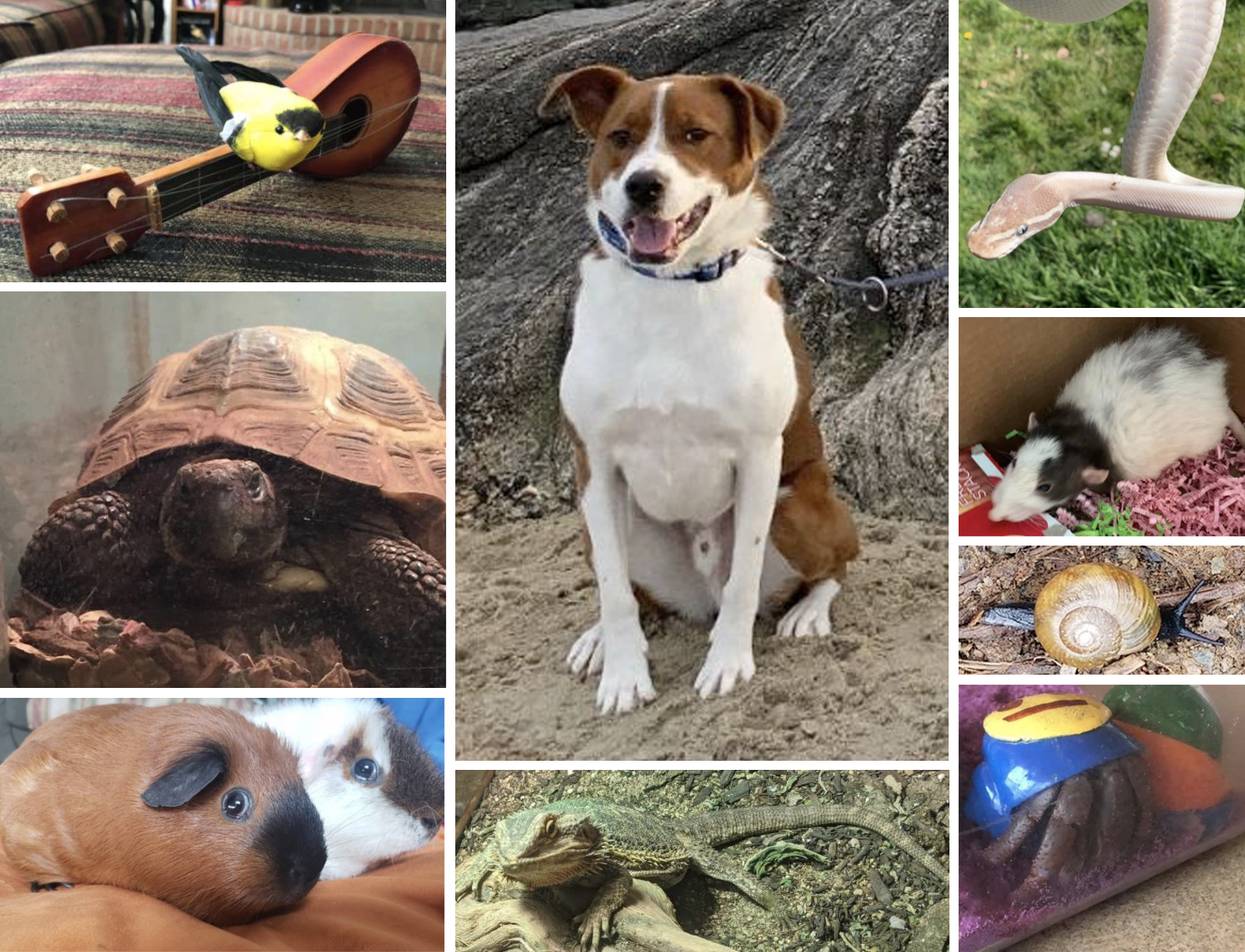 Some pets might be a dog, a bird, a turtle, a guinea pig, a lizard, a snake, a rat, a snail, and a hermit crab.
