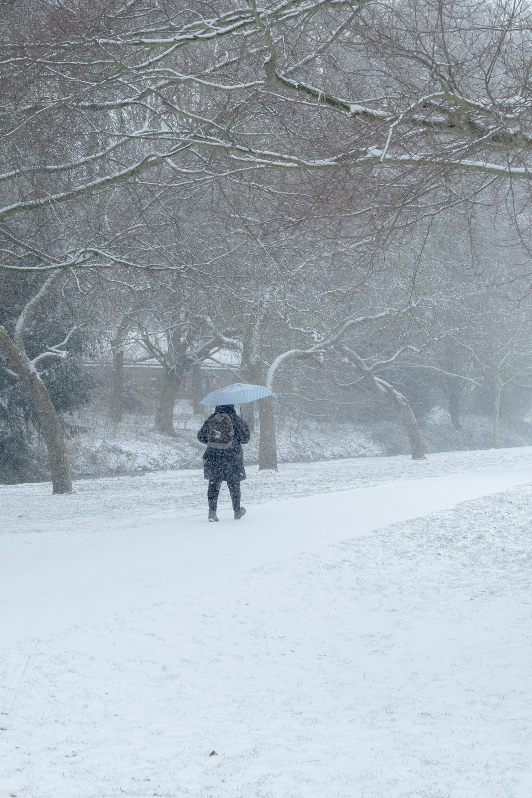A person walks in a snowstorm.