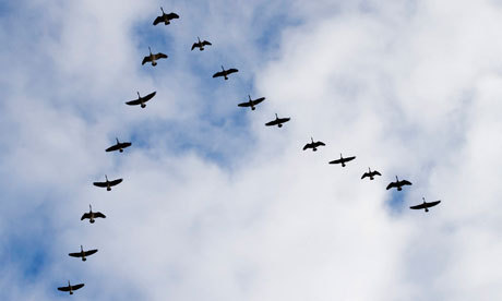 5 Important Online Community Management Principles: Taught by Geese