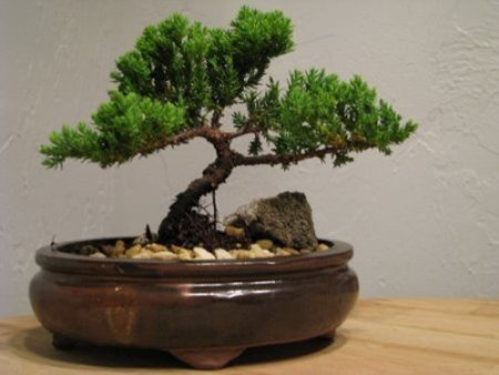 the pot and the soil cannot be neglected for the roots of the plant the story engine need to be contained and nurtured by sound rules and balanced bonsai tree