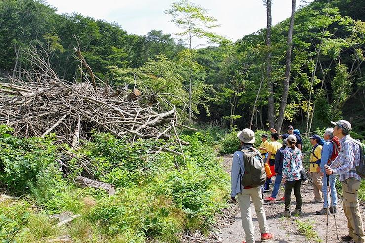 """山巡ツアーは、実際に伐り出される前の木とその現場、 ナラの製材の様子など、カタチを変えながら循環する""""自然の資源""""が辿る道を共に歩きます。 山巡ツアーは別途¥10,000(+税)いただきます。お支払いは現地支払いとなります。"""