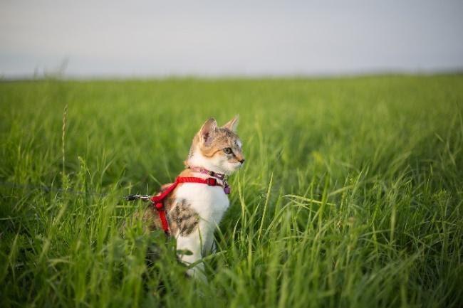 permettez à votre chat de profiter de l'extérieur en toute sécurité