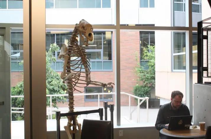 Amazon ice-age bear skeleton at HQ