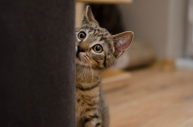 Why do kittens need a safe room in their new home?