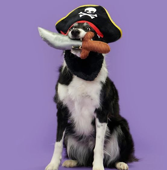 Dog in a halloween pirate costume