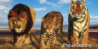 Image result for lions and cheetahs