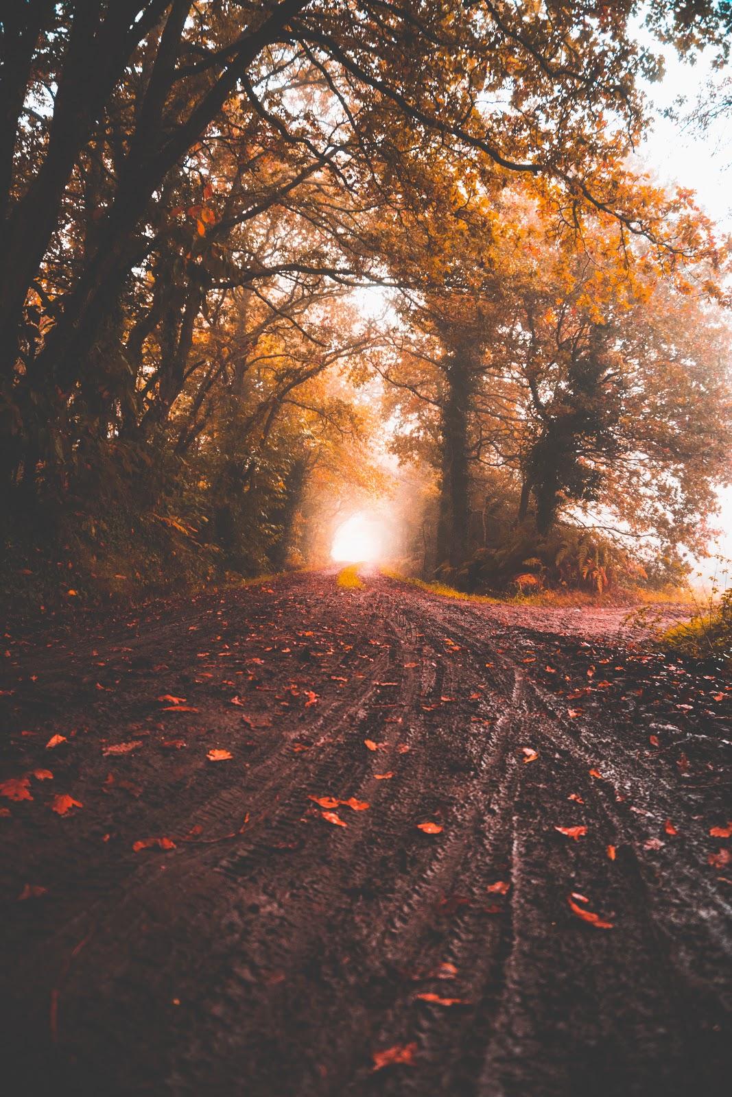 Jakie Kolory nosić jesienią? Leśna droga otoczona skrzącymi się kolorami drzewami obsypana czerwonymi liśćmi