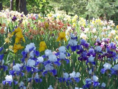 Garden a Tranquil Twist