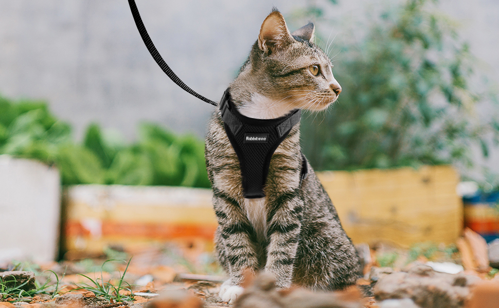 cute gifts for cat owners