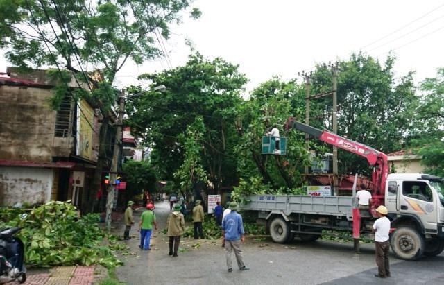 Dự án cắt tỉa cây ở Tây Ninh chất lượng