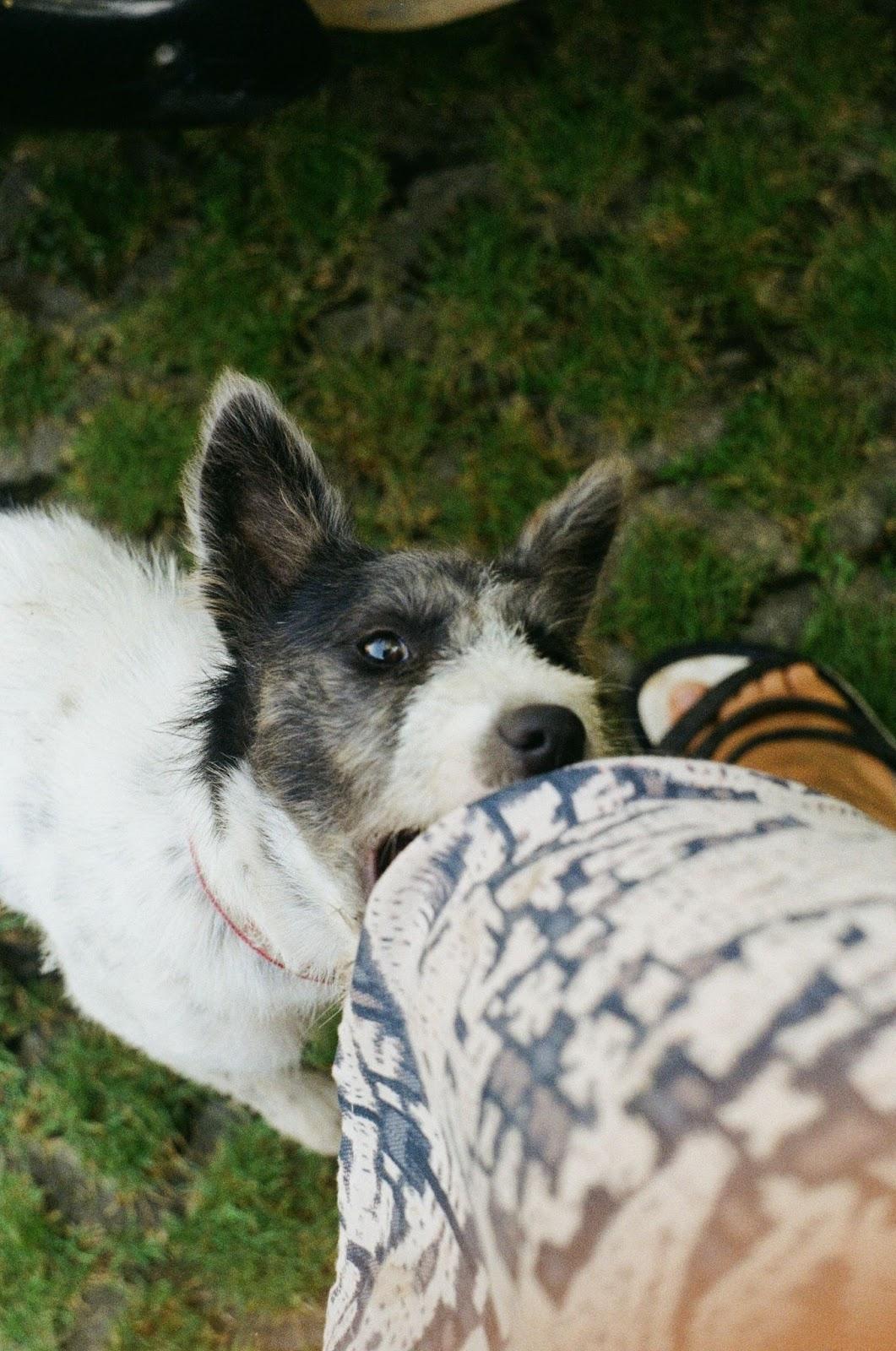 Compensation for dog bite victims