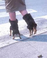 Παπούτσια σκυλάκια