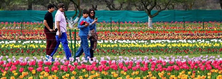 Image result for tulip festival srinagar 2019