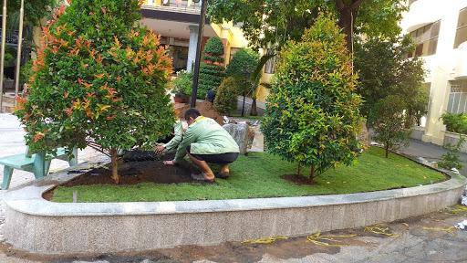 chăm sóc cây chuyên nghiệp