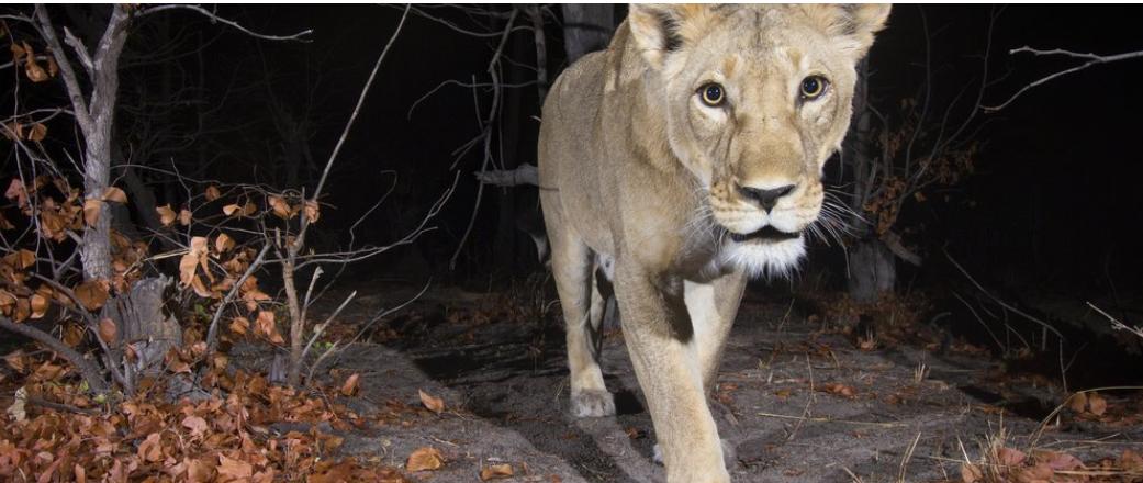 How Data Analytics Is Helping Address Wildlife Crime