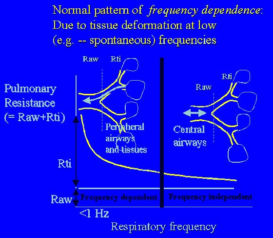 An important feature of the respiratory system is frequency dependence of respiratory resistance.