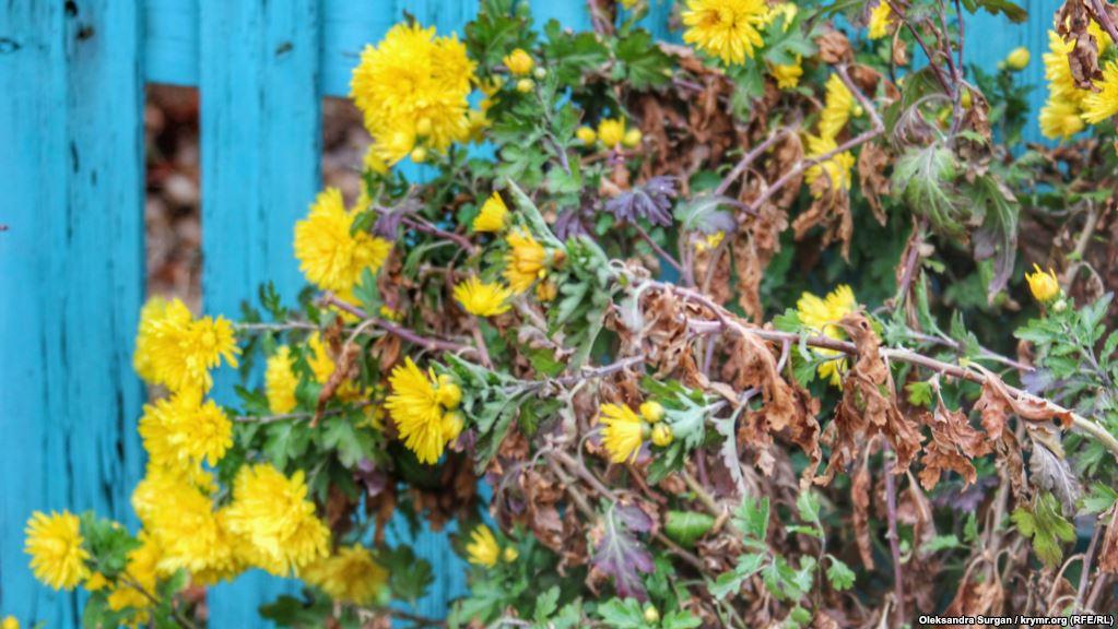 Цветы во дворе частного дома. Перекоп