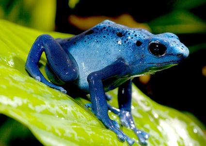 Điềm báo khi mơ thấy ếch