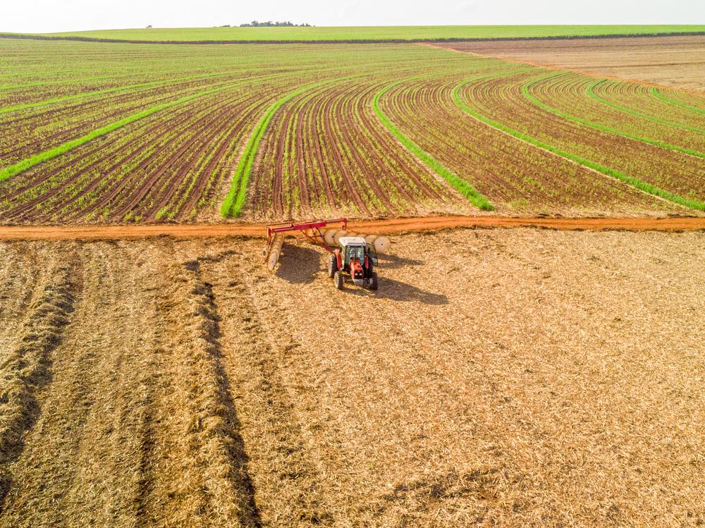 O terreno pouco acidentado facilita a mecanização massiva. (Fonte: Shutterstock)