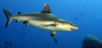 Image result for shark