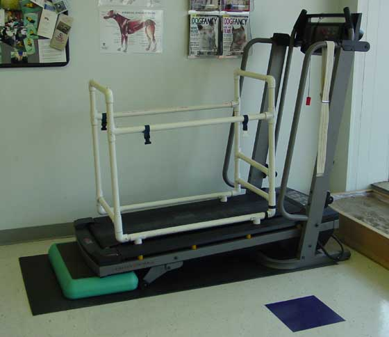 Treadmills are available in various sizes for dogs