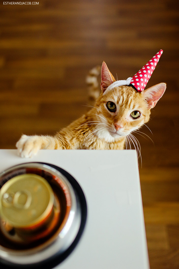 A Cat Birthday Celebration!