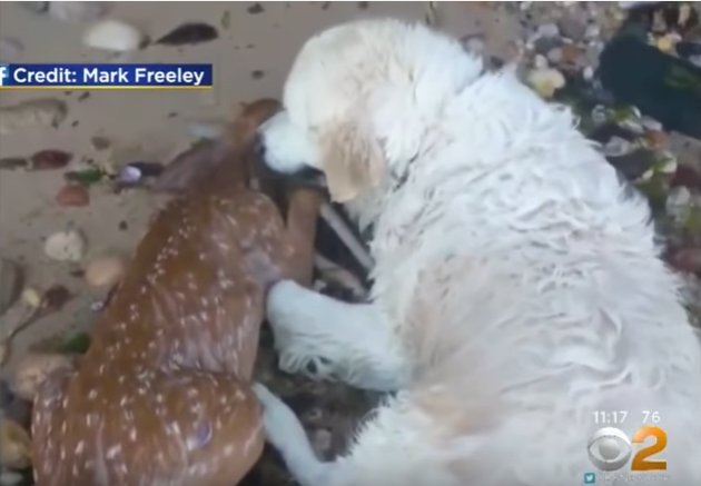 Dog&Fawn.png