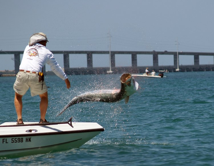 Tarpon jumping near a boat as the angler looks on