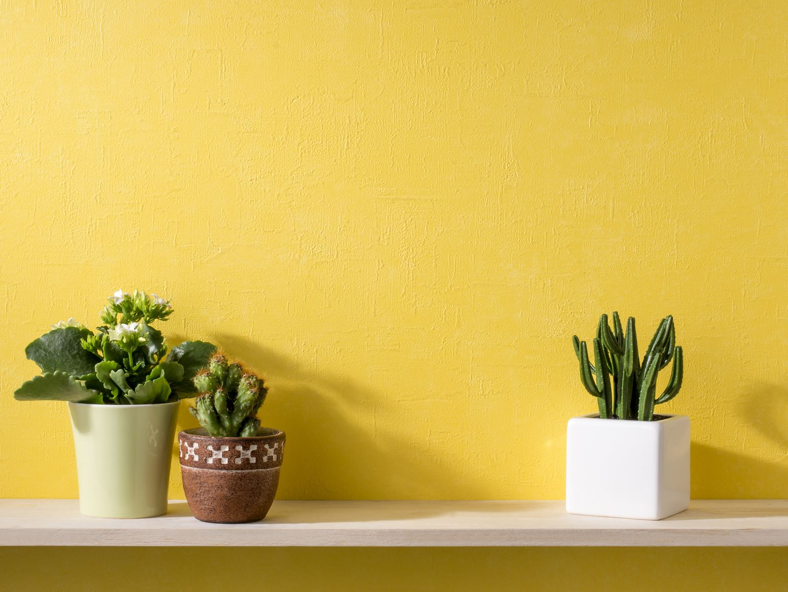 Màu Vàng luôn mang đến năng lượng, phù hợp với nhà bếp và phòng tắm.