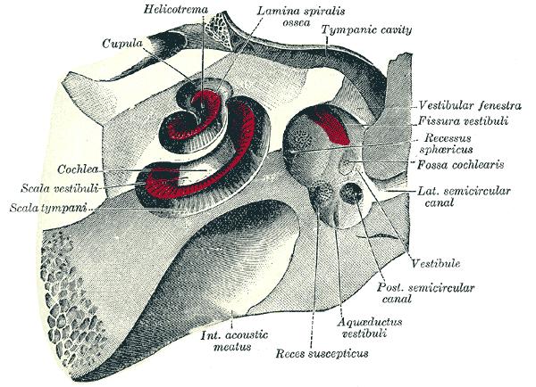 kvinnelig kjønnsorgan anatomi er drit