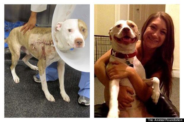 Perro herido tras haber sido disparado y su recuperación