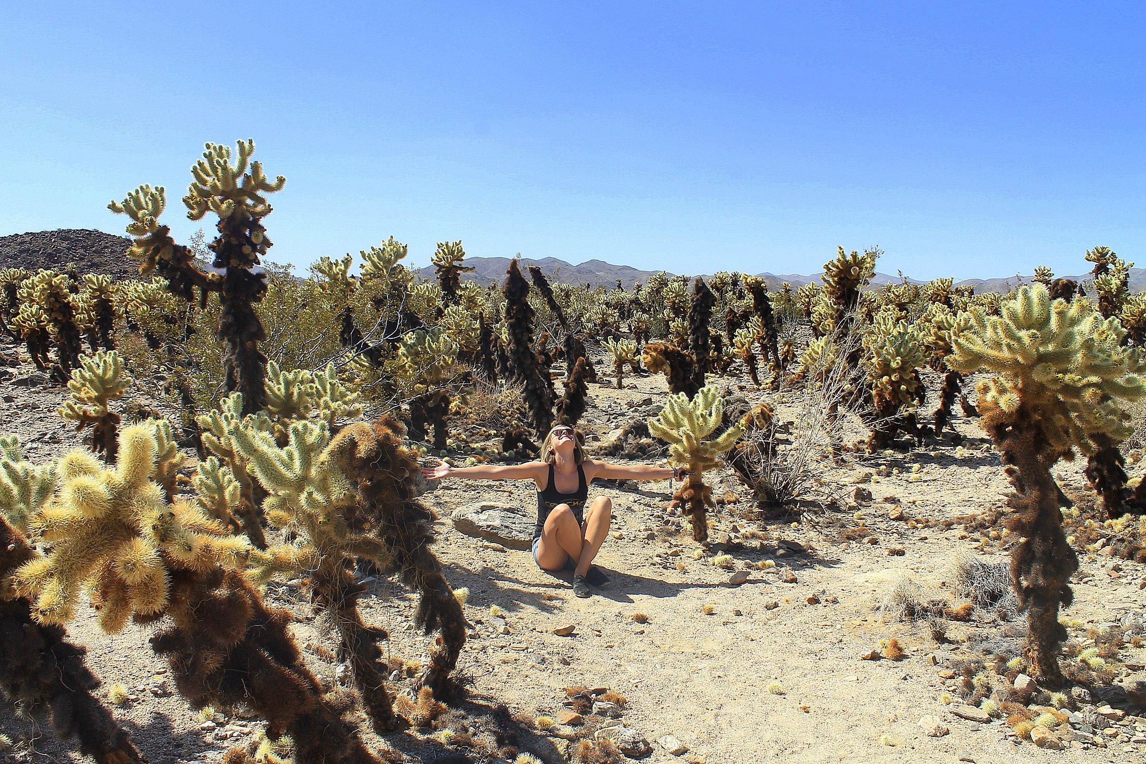top things to do in California | Joshua Tree