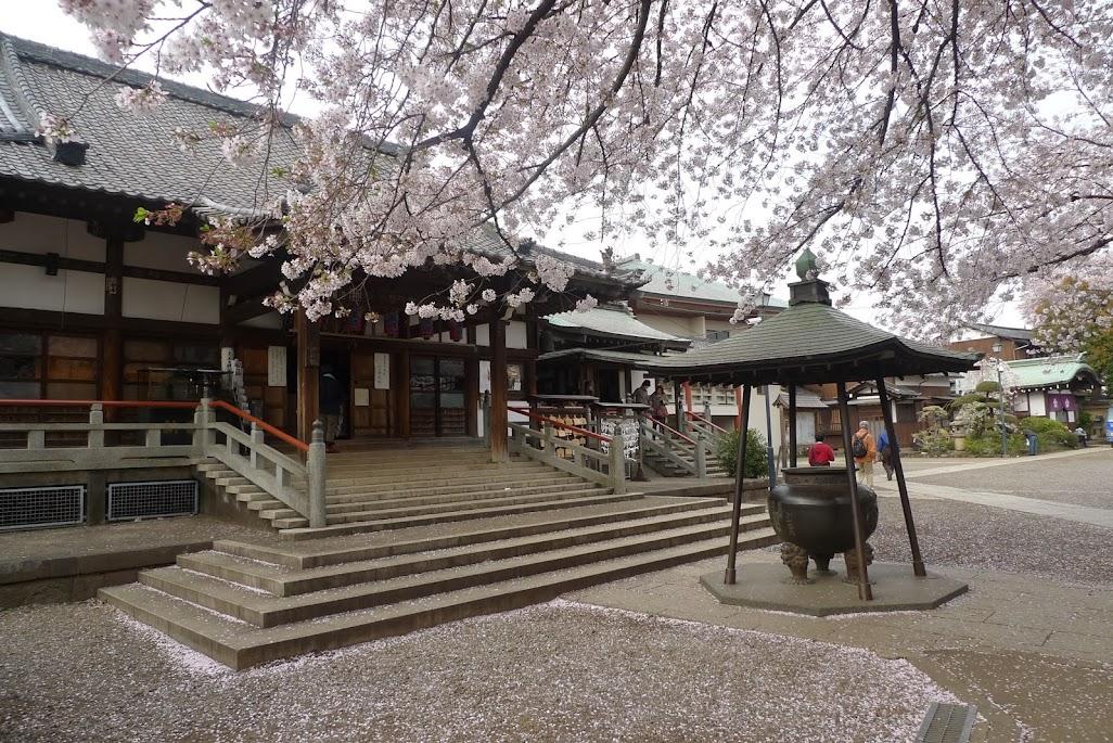 araiyakushi sakura nakano